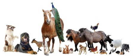 group of farm animals in front of white background