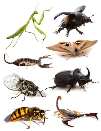 insects and scorpions in front of white background