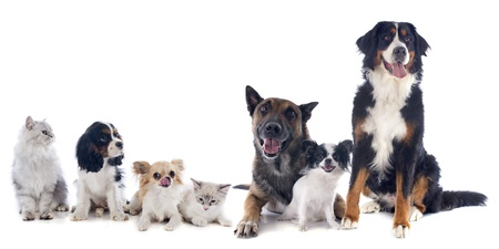 Photo for seven dogs and cat in front of white background - Royalty Free Image