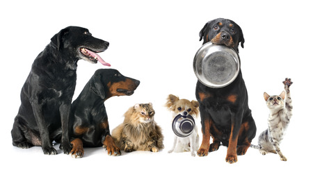 Photo pour hungry pets in front of a white background - image libre de droit