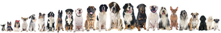 Photo pour group of dogs of white background - image libre de droit