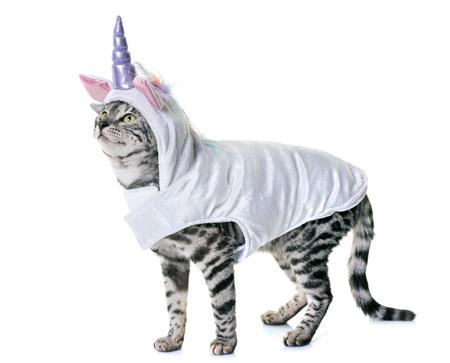 Foto de bengal cat in front of white background - Imagen libre de derechos