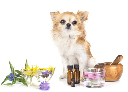 Foto de dog and essential oils in front of white background - Imagen libre de derechos