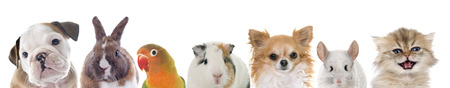 Photo pour group of pet in front of white background - image libre de droit