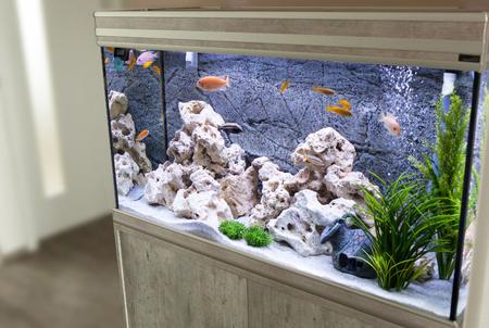 Photo pour Aquarium with cichlids fish from lake malawi - image libre de droit