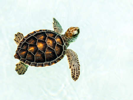 Photo for Cute endangered baby turtle swimming in crystal clear water - Royalty Free Image