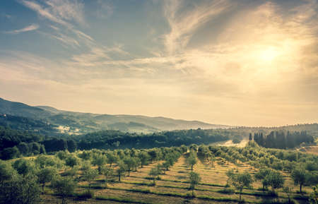 Photo pour Blue sky over olive field in Tuscany - image libre de droit