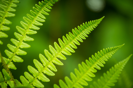 Foto de A beautiful vibrant closeup of fern leaves on a natural background in summer - Imagen libre de derechos
