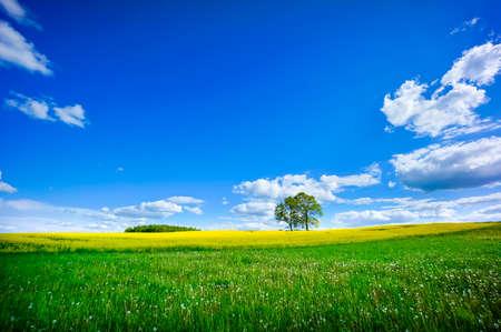 Photo pour Beautiful summer landscape of meadows with trees. Lithuania - image libre de droit