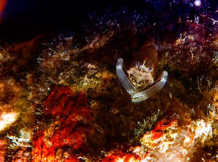 Photo for Vintner shrimp. - Royalty Free Image