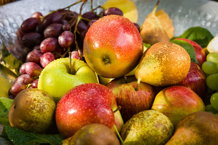 Photo pour Fruit picking at the end of the summer - apples, pears and grapes - image libre de droit