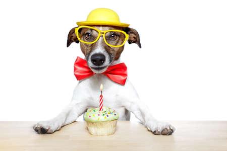 dog with a cupcake