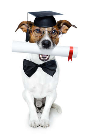 dog with diploma and graduated