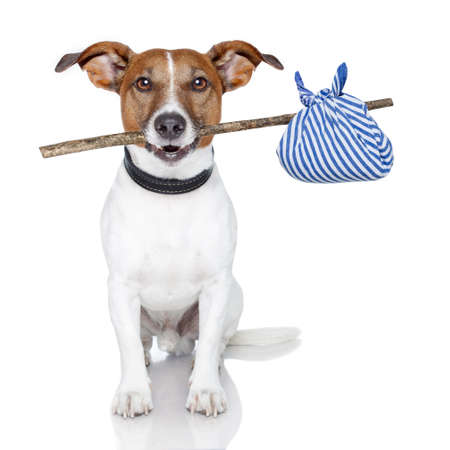 dog with a stick and  blue bag