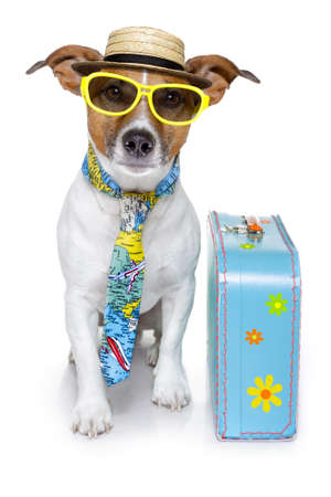 dog dressed up as a tourist