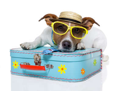 dog dressed up as a tourist