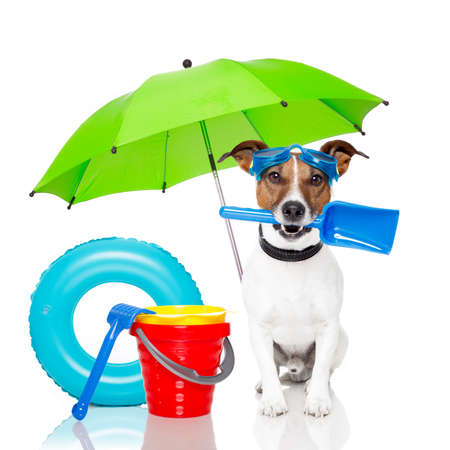 Photo for Dog with beach accessories - Royalty Free Image
