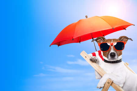 Photo for Dog sunbathing on a deck chair with empty space beside - Royalty Free Image
