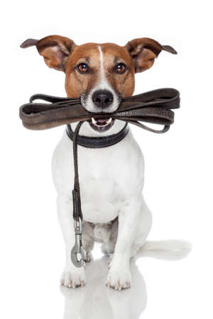 dog with a leather leash