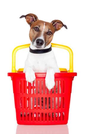 dog in basket