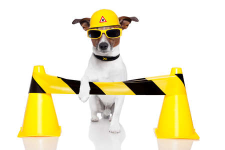 Photo pour dog under construction with a helmet - image libre de droit