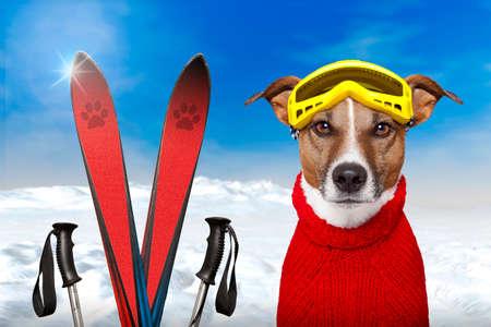 winter dog ski snow