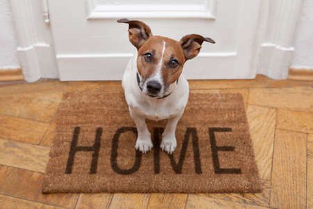Photo for dog welcome home on brown mat - Royalty Free Image