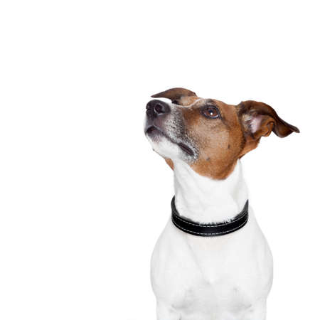 Photo for placeholder banner dog - Royalty Free Image