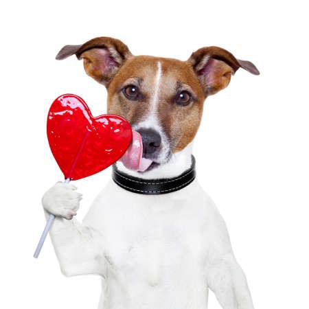 Photo pour valentine lollipop heart dog licking - image libre de droit