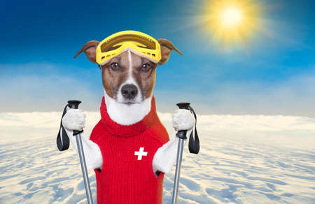 snow skiing dog with red wool sweater