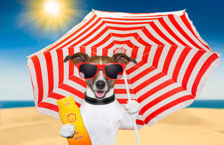 Foto de dog at the beach under red and white umbrella with sunscreen - Imagen libre de derechos