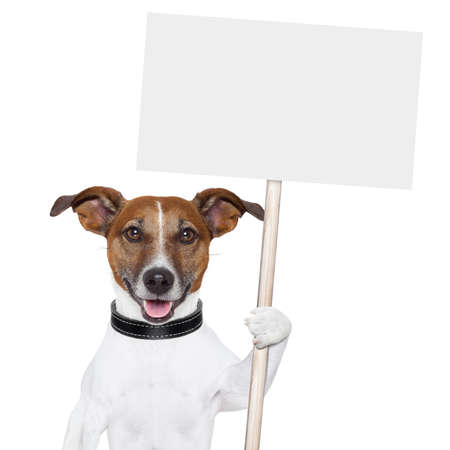 dog holding an empty placard and licking empty placard and smiling