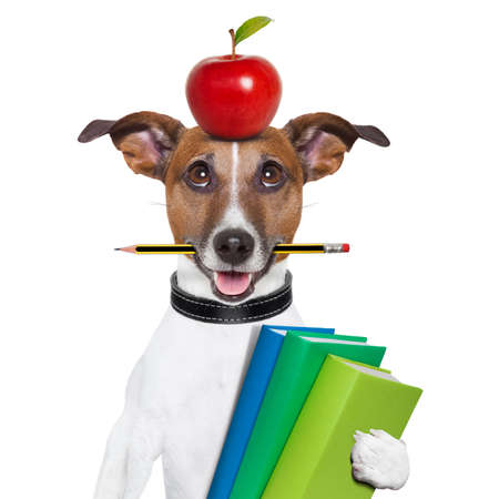 Photo pour dog going to school with books pencil and apple - image libre de droit
