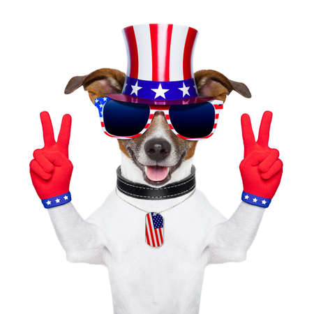 Photo for american peace and victory fingers dog with red gloves and glasses - Royalty Free Image