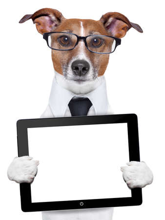 business dog with a tablet pc and glasses