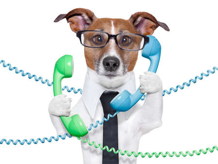 Photo pour dog tangled in  a telephone and cable chaos - image libre de droit
