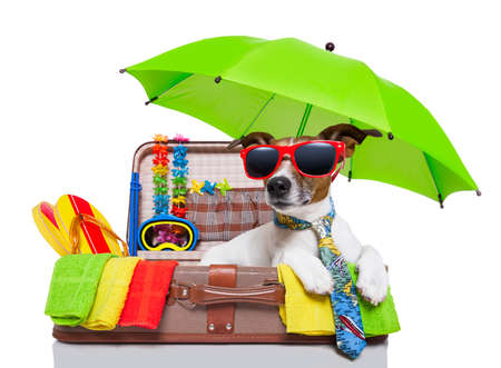 Foto de summer vacation dog in bag full of holiday items - Imagen libre de derechos