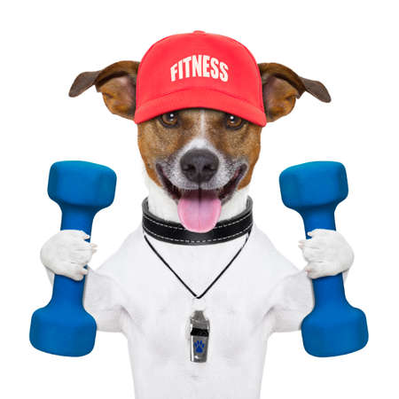 Foto de personal trainer dog with blue dumbbells and red cap - Imagen libre de derechos