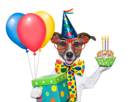 Photo for birthday dog with balloons and a cupcake - Royalty Free Image