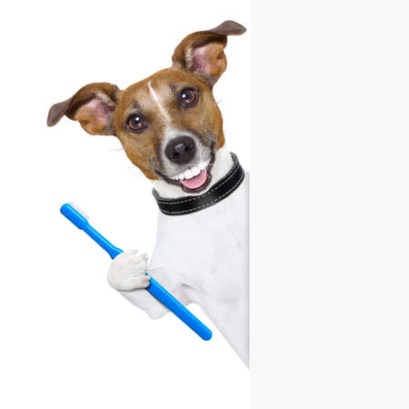 Photo pour dog with big white teeth with  a toothbrush behind banner placard - image libre de droit