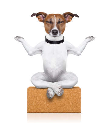 Photo pour yoga dog sitting relaxed with closed eyes thinking deeply on a brick - image libre de droit
