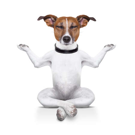 Photo pour yoga dog sitting relaxed with closed eyes - image libre de droit