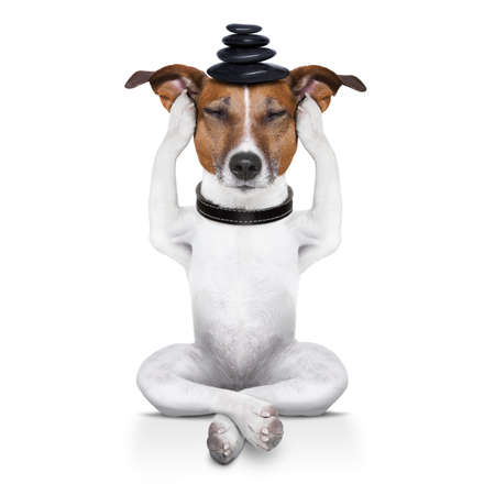 Photo pour yoga dog sitting relaxed with closed eyes thinking deeply - image libre de droit