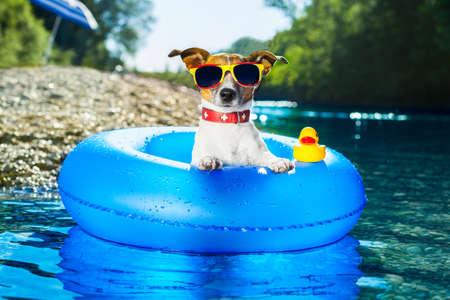 Foto de dog on  blue air mattress  in water refreshing - Imagen libre de derechos
