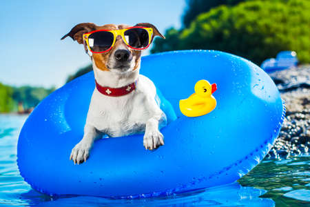 Photo pour dog on  blue air mattress  in refreshing  water - image libre de droit