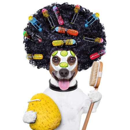 wellness dog with hair rollers and sponge