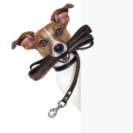 Photo pour dog with leather leash waiting to go walkies - image libre de droit