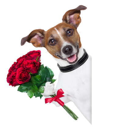 Foto de valentine dog  with a bunch of  red  roses beside a blank banner - Imagen libre de derechos