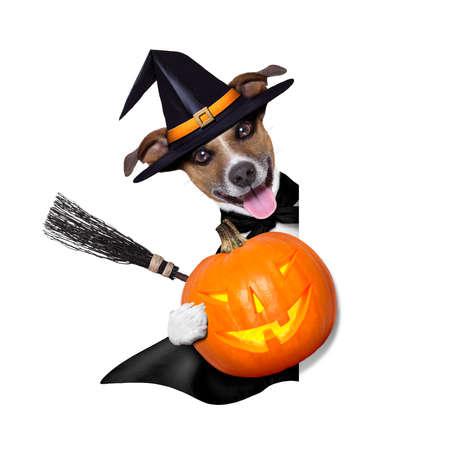halloween witch dog holding a pumpkin behind a blank banner