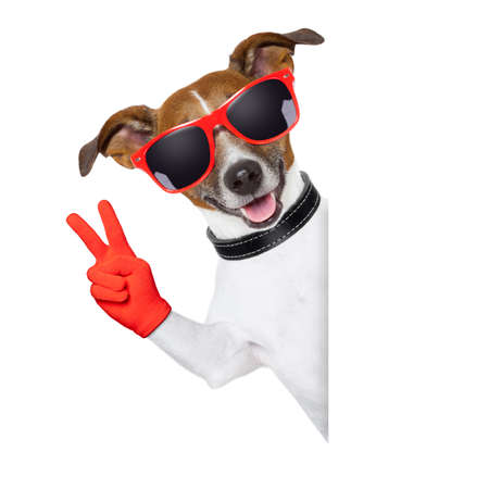 Photo pour peace  fingers dog with red gloves and glasses behind a blank banner - image libre de droit